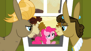 Pinkie Pie's sorry S2E18.png