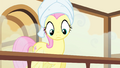 Fluttershy hears Pinkie praising her S4E14.png