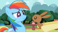 Bunny looking at Rainbow Dash S2E07