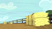 Bushel lassoing a hay bale S5E6