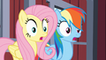 Fluttershy and Rainbow Dash gasp S03E09.png