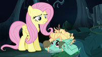 "Fluttershy ""you're smart and talented"" S6E11"