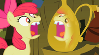 Apple Bloom watching to see her tooth grow back S2E6