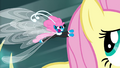 Seabreeze flapping in Fluttershy's mane S4E16.png