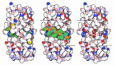 6-HIV-1Protease-7hvp activesite