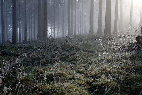 File:Feldberg forest mists.jpg