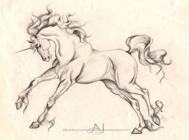 File:Unicorn sketch.jpg
