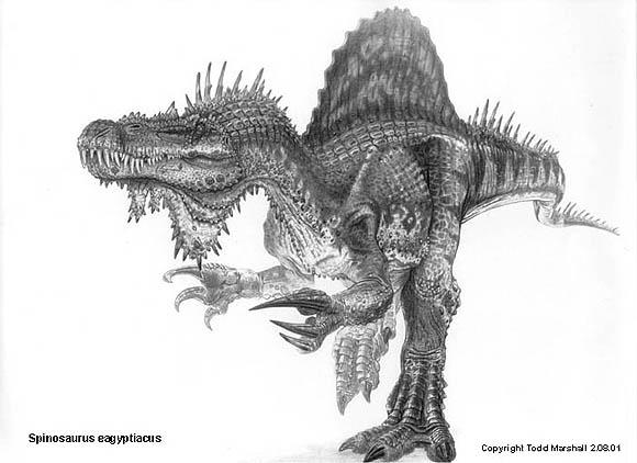 File:Spinosaurus eagyptiacus display.jpg