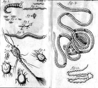 File:Nicolas Andry illustrations of microorganisms.jpg