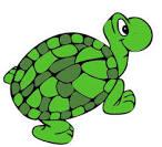 Sara turtle