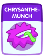 Chrysanthemunch