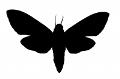 File:Moth-simeonov-1263148342-logo1.jpg