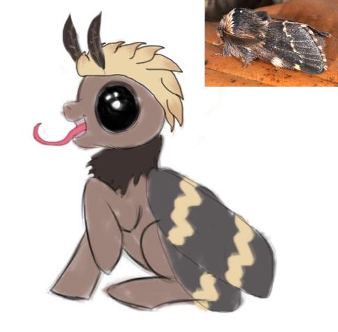 File:Dec moth copy.jpg