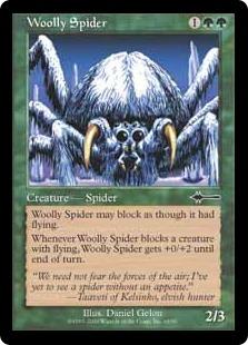 Woolly spider BD
