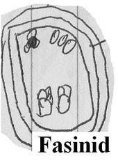 Fanisid cell