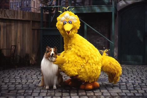 File:Lassie.sesame.jpg