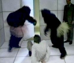 Gorillas-cube