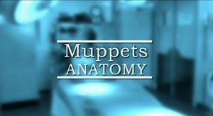 File:MuppetsAnatomy.jpg