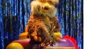 Hoots the Owl stage-show puppet