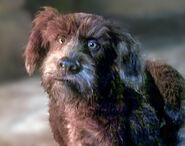Dog (The StoryTeller)