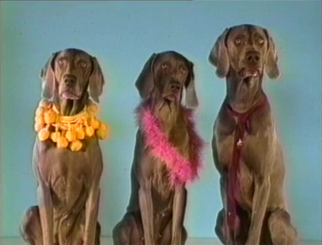 File:Wegmandogs.scarves.jpg
