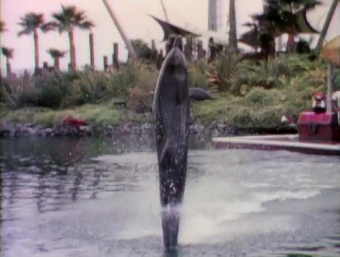 File:Raposo.Dolphin.jpg