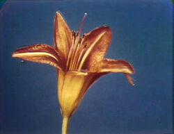Floweropens