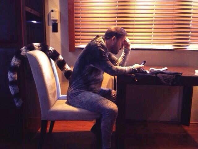 File:Ricky Gervais lemur.jpg