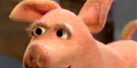 Suey the Pig