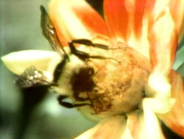 File:BeeFilm.jpg
