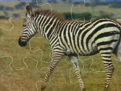 Zebrapuzzle