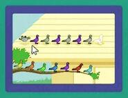 PigeonPatterns