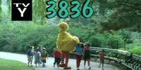 Episode 3836