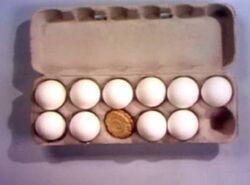 Eggscookies