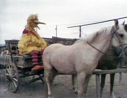 Cowboybird