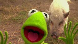 KSY-Pig