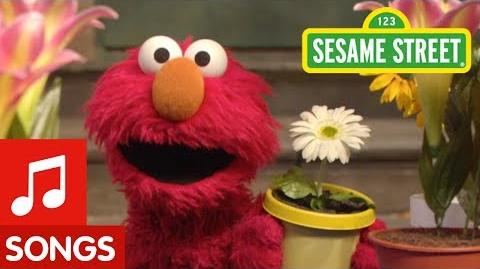 Sesame Street The Flower Song