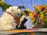 Episode 117: Raccoon & Polar Bear