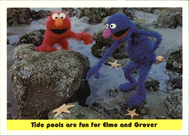 File:1992 sesame trading cards 48.jpg