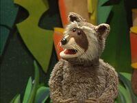 Rhonda the Raccoon