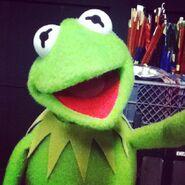 Instagram kermit the frog