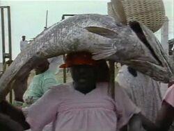 AfricanFish