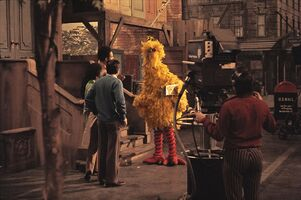 Bigbird early