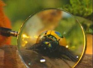 02 Magnified Bug
