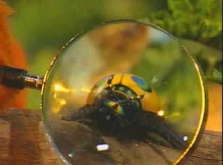 File:02 Magnified Bug.jpg