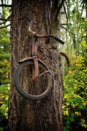 Bikegrownintoatree