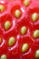 Strawberry surfacey.png