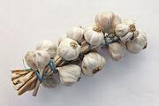 220px-Allium sativum Restra de allos de Oroso- Galiza