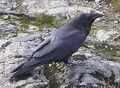 220px-Raven Cypress Provincial Park 2.jpg