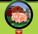 Farm Pet Module, Rank 1